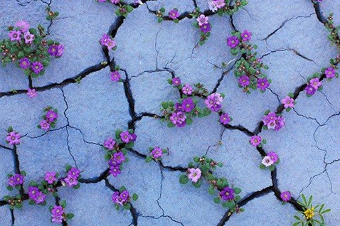 Resilienza-innata-o-appresa